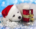 White puppy with a gift in paws Royalty Free Stock Photos