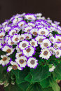 White And  Purple Flowers In A...