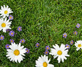 White and purple flowers on grass Stock Photos