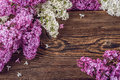White and purple lilac on wooden background, place for text, spring blooming plant Royalty Free Stock Photo