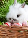 White rabbit is in the basket with green grass Royalty Free Stock Photos
