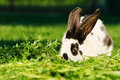 White rabbit with black dots resting on the grass blurred dark background selecitve focus s eye parts of Stock Photos