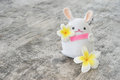 White rabbit doll hold pink paper and plumeria flowers
