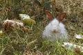 White rabbit in the grass Stock Photo