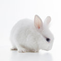 White rabbit isolated on white cute background Stock Photo