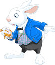 White rabbit with pocket watch Stock Image