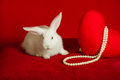 White rabbit and red heart white pearls on a background Royalty Free Stock Photo