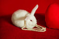 White rabbit and red heart white pearls on a background Stock Photo