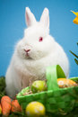 White rabbit sitting behind easter eggs green basket blue background Stock Photo