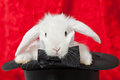 White rabbit in a top hat Royalty Free Stock Image