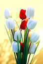 White and red tulip flowers with yellow background