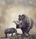 White rhinoceros adult and baby Stock Image