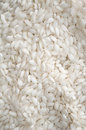 White Rice Stock Images
