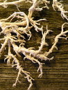 White root on old wooden desk Royalty Free Stock Photo