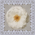 White rose on the linen cloth with Crochet frame. Handmade Collage background for Valentine day Royalty Free Stock Photo