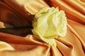 White Rose Purity Symbol, Eleg...