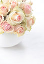 Biely ruže