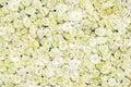 White roses background Royalty Free Stock Photo