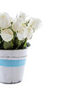 White roses with blue ribbon Royalty Free Stock Photo