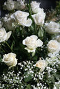 White roses, bouquet Stock Images