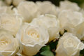 White roses texture and background Stock Image