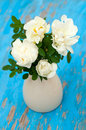 White roses in vase on blue wooden background close up Stock Photos