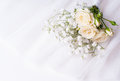 White roses on a white tulle Royalty Free Stock Photo