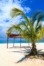 White sand beach in the tropics with palm tree Royalty Free Stock Photography