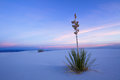 White Sands in Twilight Stock Photos