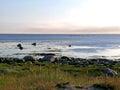 White sea coast view on the Royalty Free Stock Image