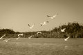 White seagull fly above river and riverside Royalty Free Stock Photo