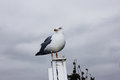 White seagull standing on a column against a cloudy sky background Royalty Free Stock Photo