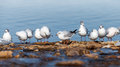White seagulls sit on the sea coast Royalty Free Stock Image