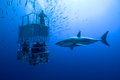 White shark cage great swims around the Stock Photos