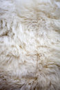 White sheep fur texture washed suitable for background Royalty Free Stock Image