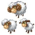 White sheep. Vector animal
