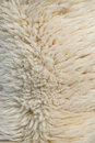 White Sheep wool Stock Photos