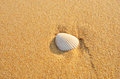 White shell on brown sand Royalty Free Stock Photo