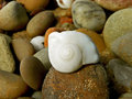 White shell a close up view of a on the beach Royalty Free Stock Photo