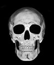 White skull isolated on black background Royalty Free Stock Photo