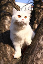 White small cat Stock Images