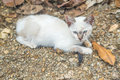 White small kitty Royalty Free Stock Photo