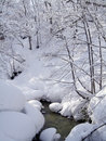 White snow forest valley river flow middle Royalty Free Stock Photography