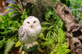 white snowy owl at the garden Royalty Free Stock Photo