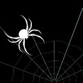 White spider on the black background. Vector silhouette
