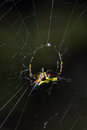 White spider wait with woven web Royalty Free Stock Photography