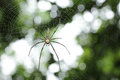 White spider wait with woven web spider in the nature Stock Images