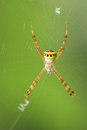 White spider wait with woven web spider in the nature Royalty Free Stock Images