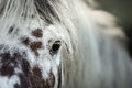 White spotted horse portrait Royalty Free Stock Photo