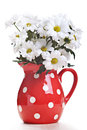 White spring flowers red pot Stock Images